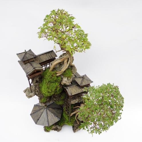 cliff-bonsai-2