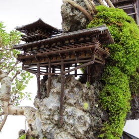 cliff-bonsai-3