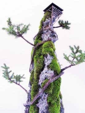 cliff-bonsai-5