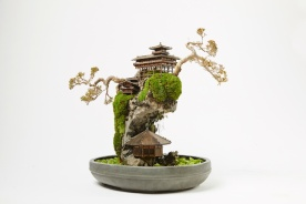 cliff-bonsai-6