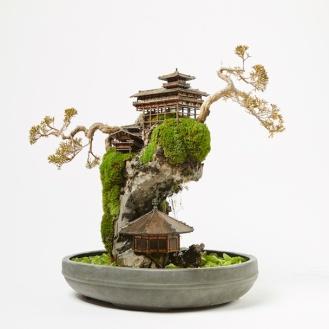 cliff-bonsai-6