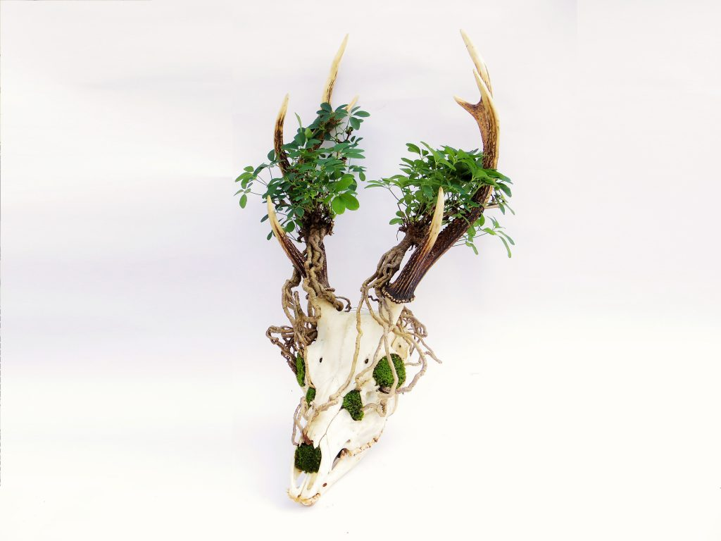 Skull Bonsai Art